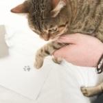 cat doing print